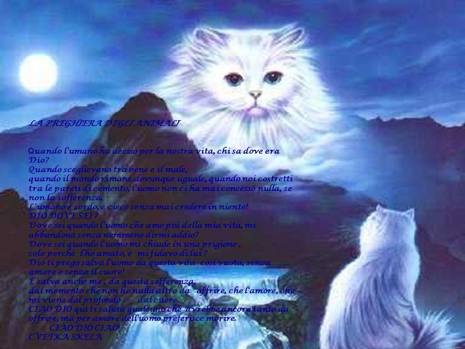 LA PREGHIERA DEGLI ANIMALI Q uando l'umano ha deciso per la nostra vita, chi sa dove era Dio? Quando sceglievano tra bene e il male, quando il mondo r