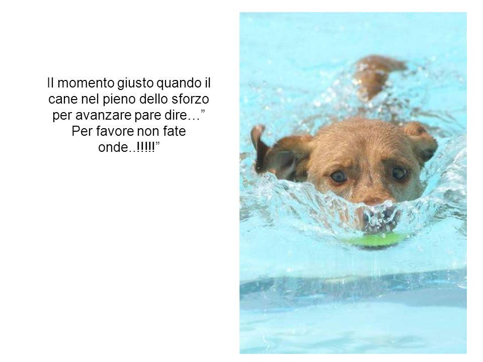 Il momento giusto quando il cane nel pieno dello sforzo per avanzare pare dire… Per favore non fate onde..!!!!!