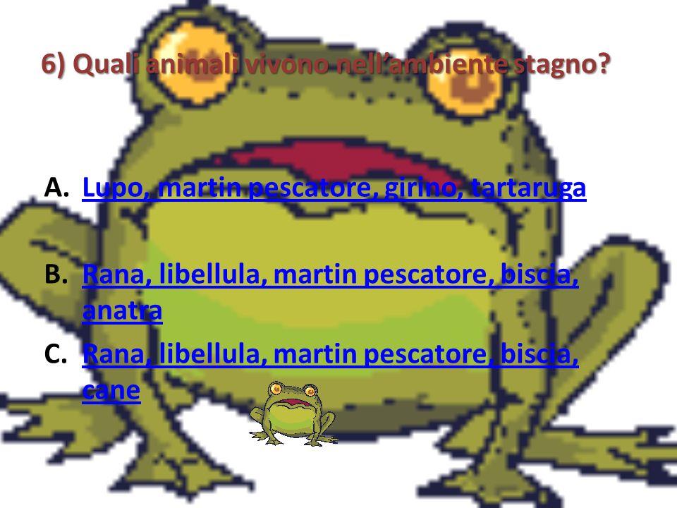 6) Quali animali vivono nellambiente stagno? A.Lupo, martin pescatore, girino, tartarugaLupo, martin pescatore, girino, tartaruga B.Rana, libellula, m