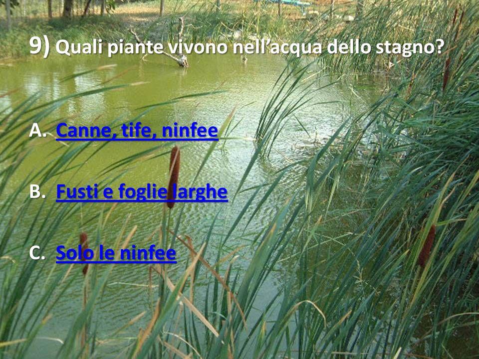 9) Quali piante vivono nellacqua dello stagno? A.Canne, tife, ninfee Canne, tife, ninfeeCanne, tife, ninfee B.Fusti e foglie larghe Fusti e foglie lar