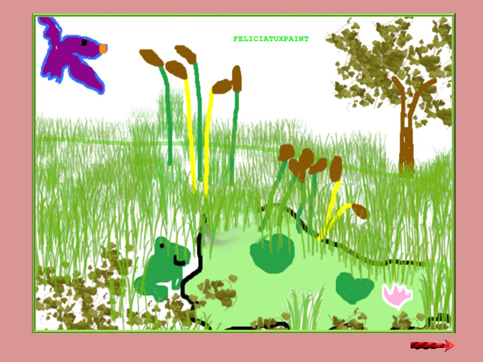 9) Quali piante vivono nellacqua dello stagno.