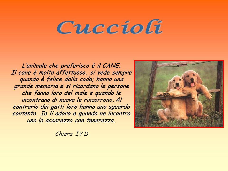 Lanimale che preferisco è il CANE. Il cane è molto affettuoso, si vede sempre quando è felice dalla coda; hanno una grande memoria e si ricordano le p