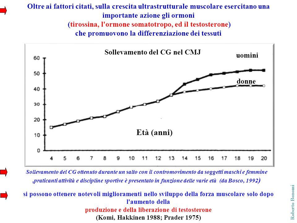 Roberto Bonomi Un lungo periodo di allenamento intensivo stimola il controllo nervoso producendo una notevole ipertrofia soprattutto delle fibre FT Distribuzione delle fibre FT nel muscolo estensore delle coscia in funzione dell età (Bolte et al.