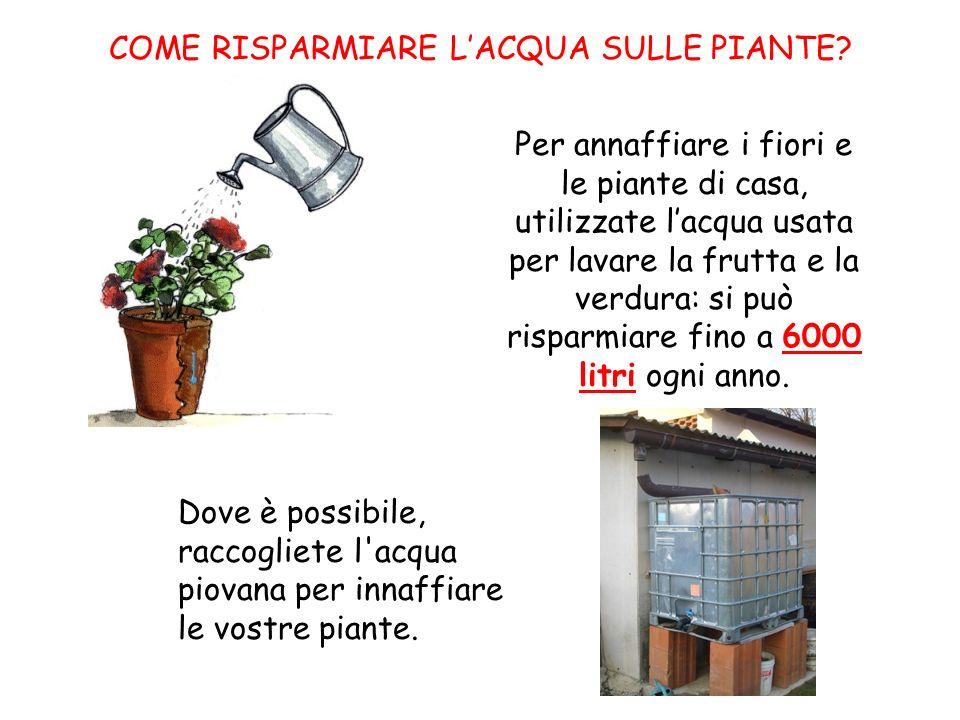 COME RISPARMIARE LACQUA SULLE PIANTE? Per annaffiare i fiori e le piante di casa, utilizzate lacqua usata per lavare la frutta e la verdura: si può ri