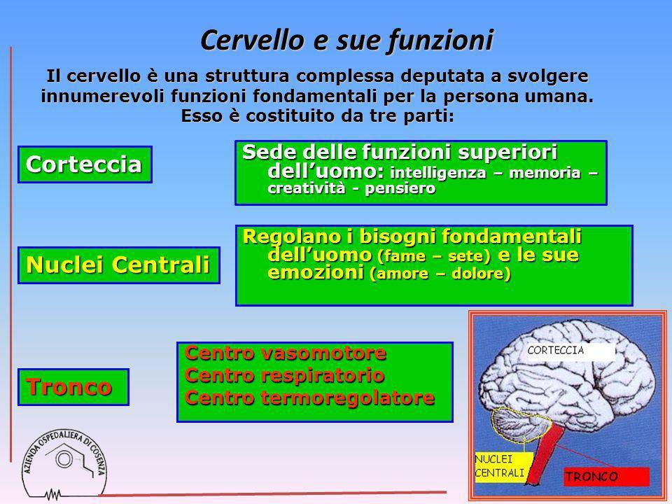 Sede delle funzioni superiori delluomo: intelligenza – memoria – creatività - pensiero Corteccia Nuclei Centrali Tronco Regolano i bisogni fondamental