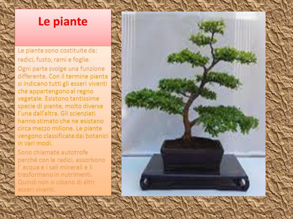 Le piante Le piante sono costituite da: radici, fusto, rami e foglie. Ogni parte svolge una funzione differente. Con il termine pianta si indicano tut