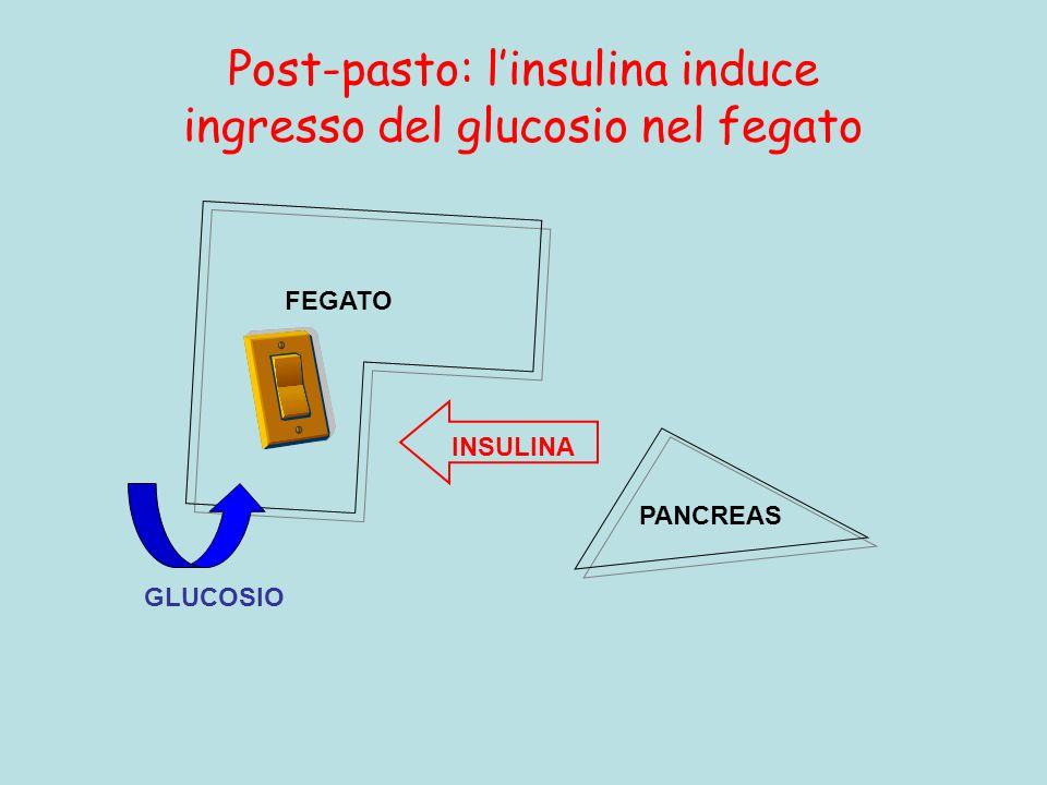 Post-pasto: linsulina induce ingresso del glucosio nel fegato FEGATO PANCREAS INSULINA GLUCOSIO