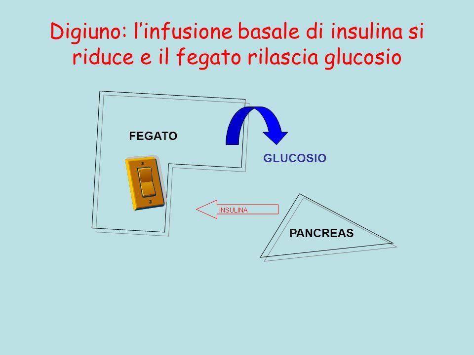 Digiuno: linfusione basale di insulina si riduce e il fegato rilascia glucosio FEGATO PANCREAS GLUCOSIO INSULINA