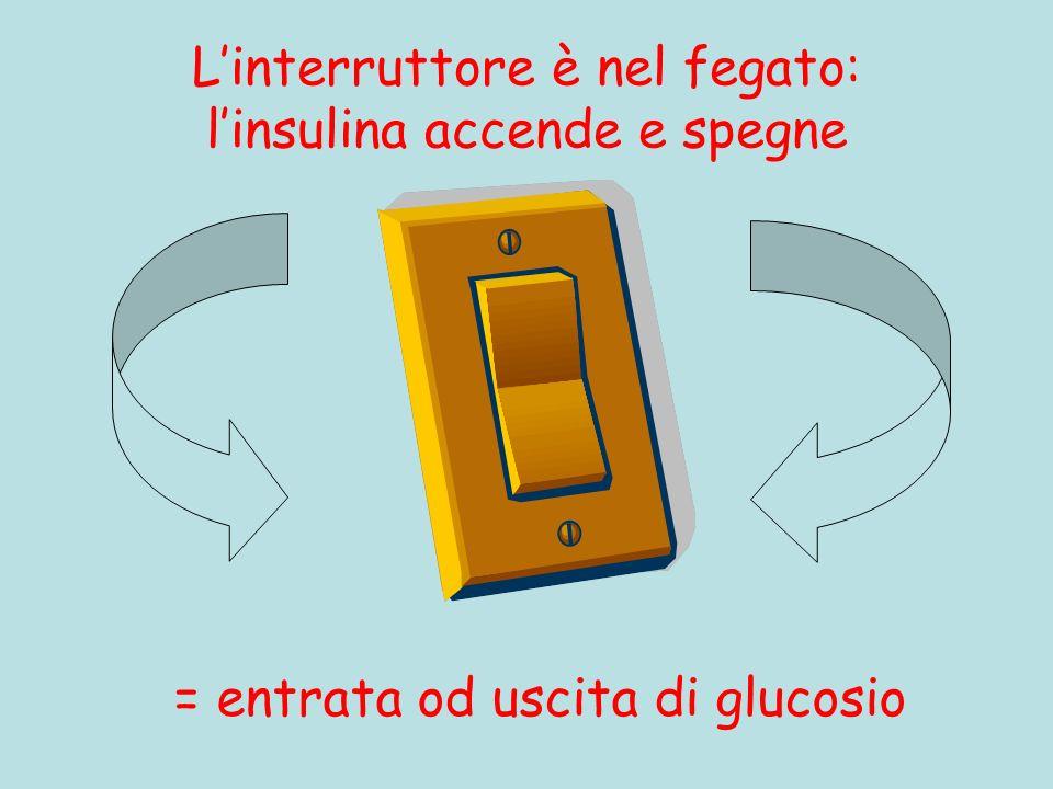 Linterruttore è nel fegato: linsulina accende e spegne = entrata od uscita di glucosio