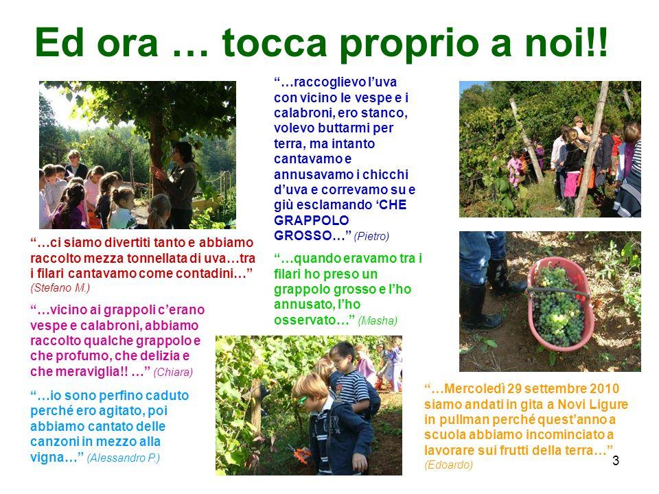 3 Ed ora … tocca proprio a noi!! …ci siamo divertiti tanto e abbiamo raccolto mezza tonnellata di uva…tra i filari cantavamo come contadini… (Stefano