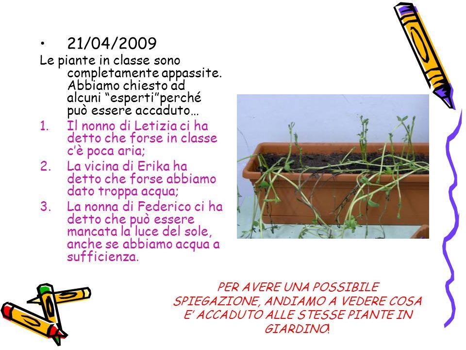 21/04/2009 Le piante in classe sono completamente appassite. Abbiamo chiesto ad alcuni espertiperché può essere accaduto… 1.Il nonno di Letizia ci ha