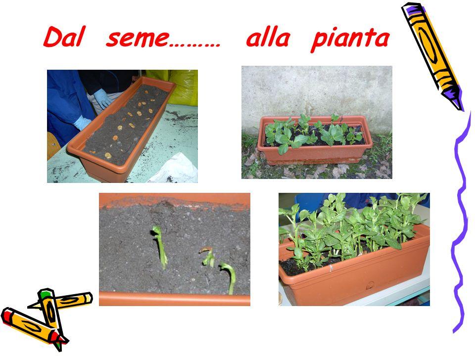 Dal seme……… alla pianta