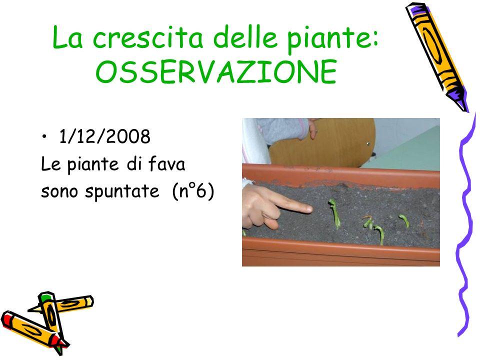 La crescita delle piante: OSSERVAZIONE 1/12/2008 Le piante di fava sono spuntate (n°6)