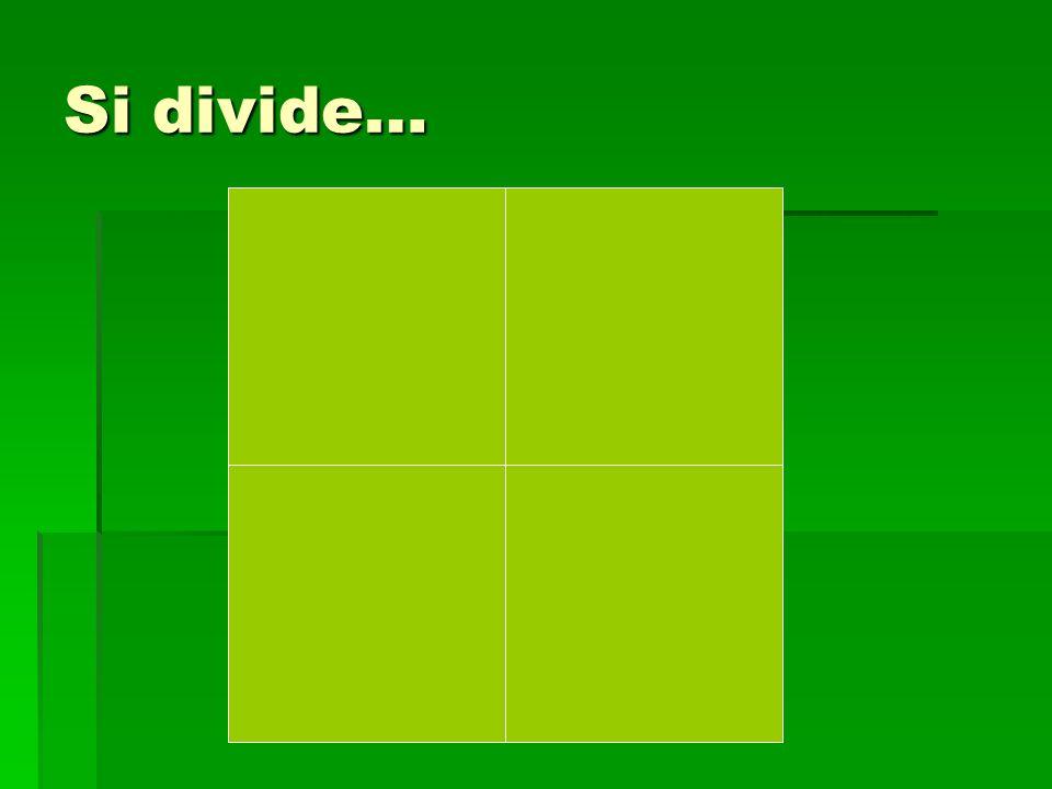 Si divide…
