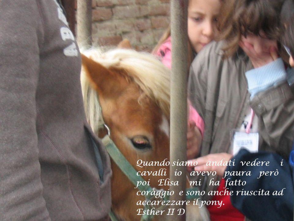 Quando siamo andati vedere i cavalli io avevo paura però poi Elisa mi ha fatto coraggio e sono anche riuscita ad accarezzare il pony. Esther II D