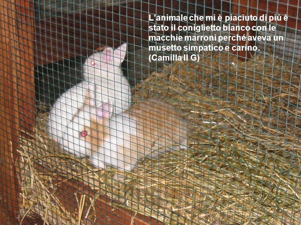 Lanimale che mi è piaciuto di più è stato il coniglietto bianco con le macchie marroni perché aveva un musetto simpatico e carino. (Camilla II G)