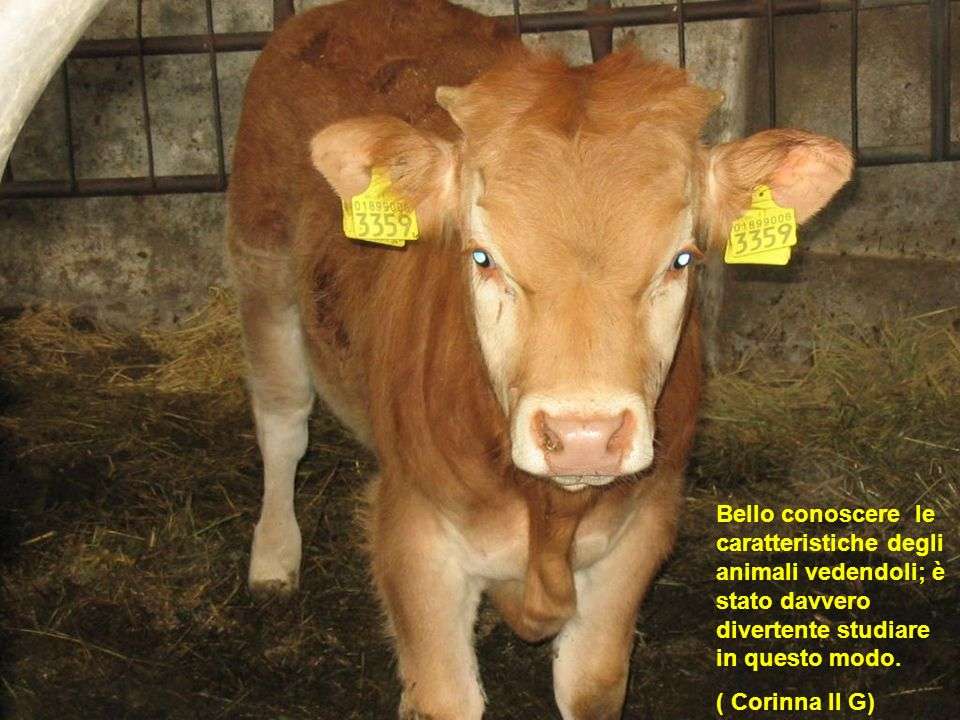 Bello conoscere le caratteristiche degli animali vedendoli; è stato davvero divertente studiare in questo modo. ( Corinna II G)