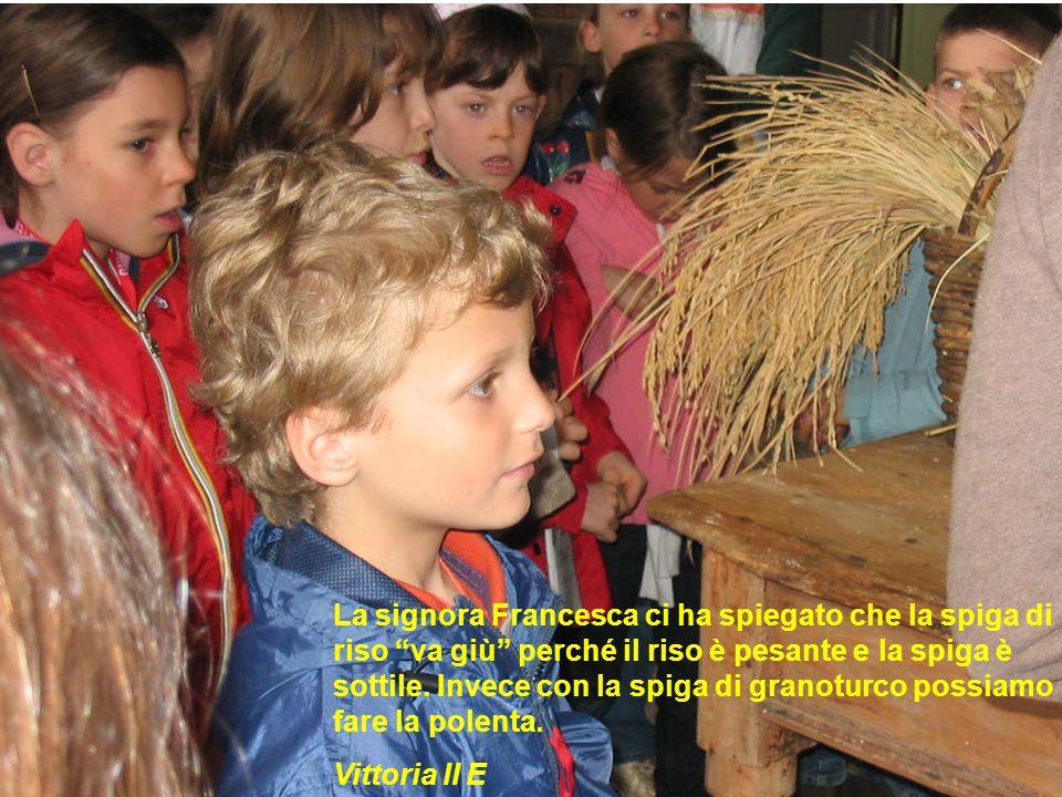 La signora Francesca ci ha spiegato che la spiga di riso va giù perché il riso è pesante e la spiga è sottile. Invece con la spiga di granoturco possi