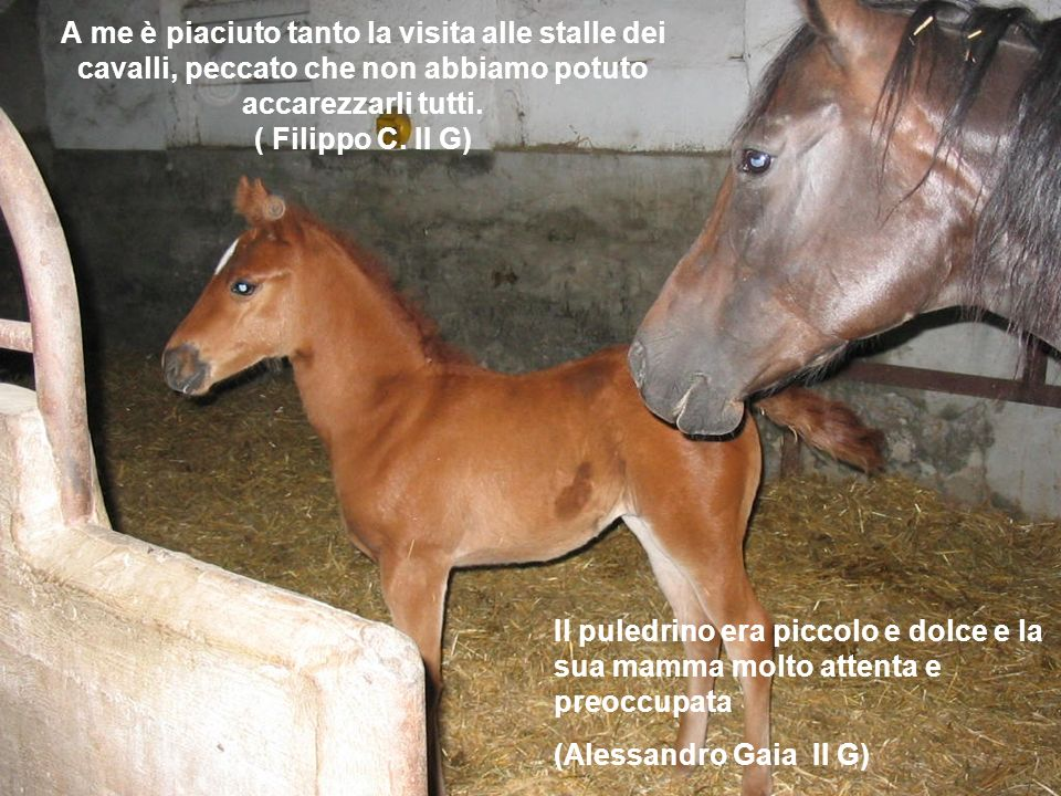 Il puledrino era piccolo e dolce e la sua mamma molto attenta e preoccupata (Alessandro Gaia II G) A me è piaciuto tanto la visita alle stalle dei cav