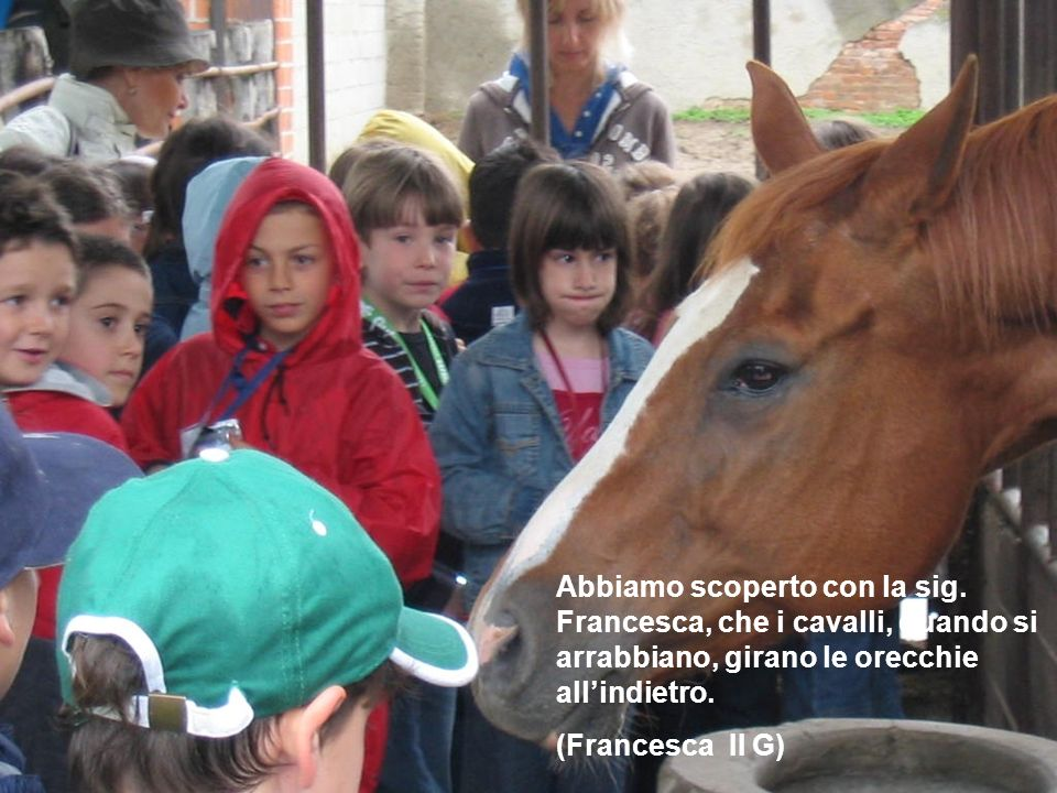 Abbiamo scoperto con la sig. Francesca, che i cavalli, quando si arrabbiano, girano le orecchie allindietro. (Francesca II G)