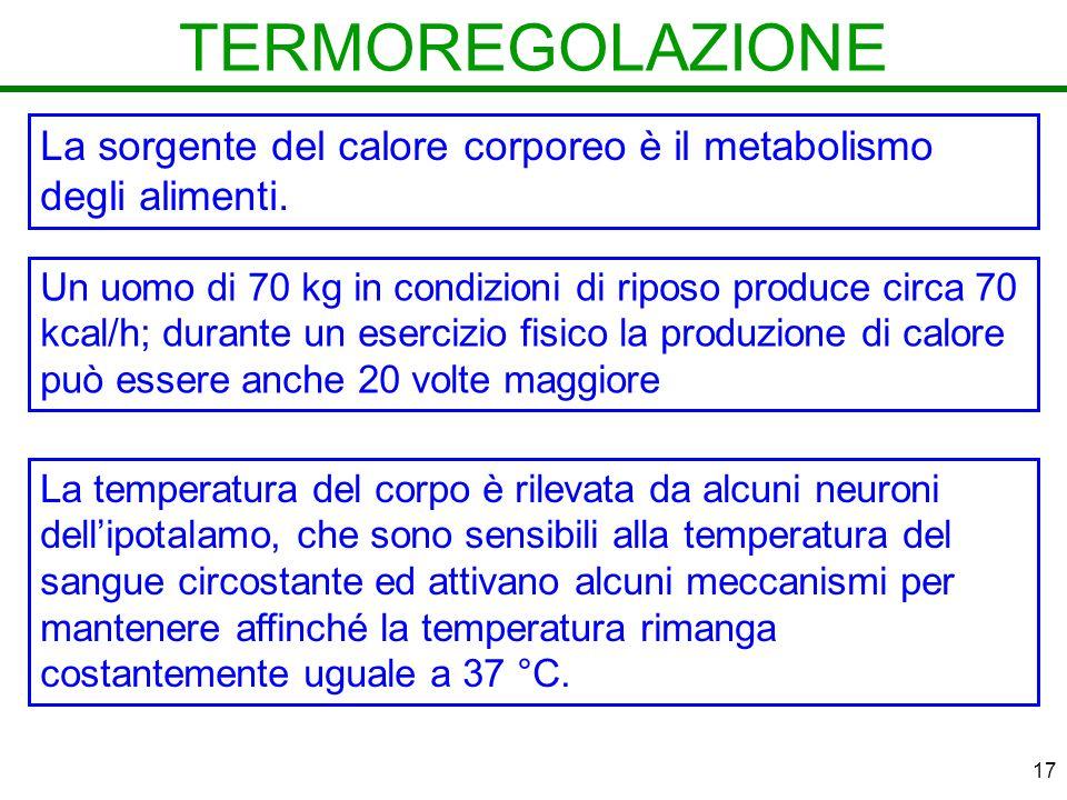 17 TERMOREGOLAZIONE La sorgente del calore corporeo è il metabolismo degli alimenti.