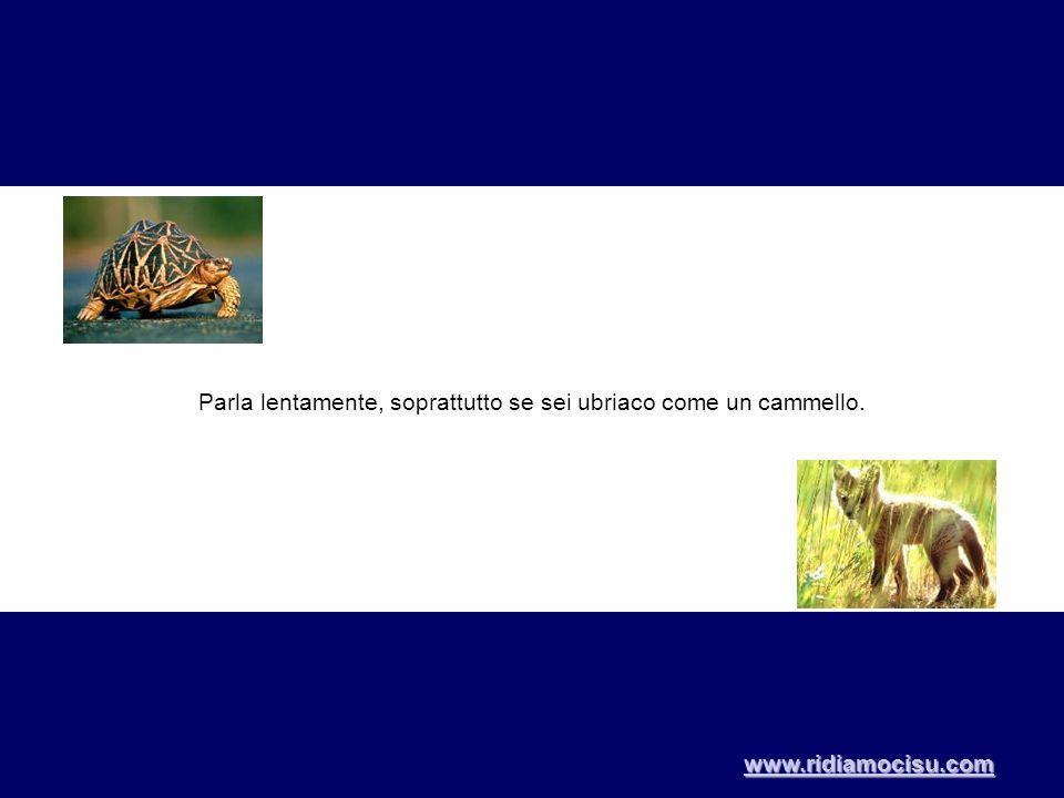 Parla lentamente, soprattutto se sei ubriaco come un cammello. www.ridiamocisu.com