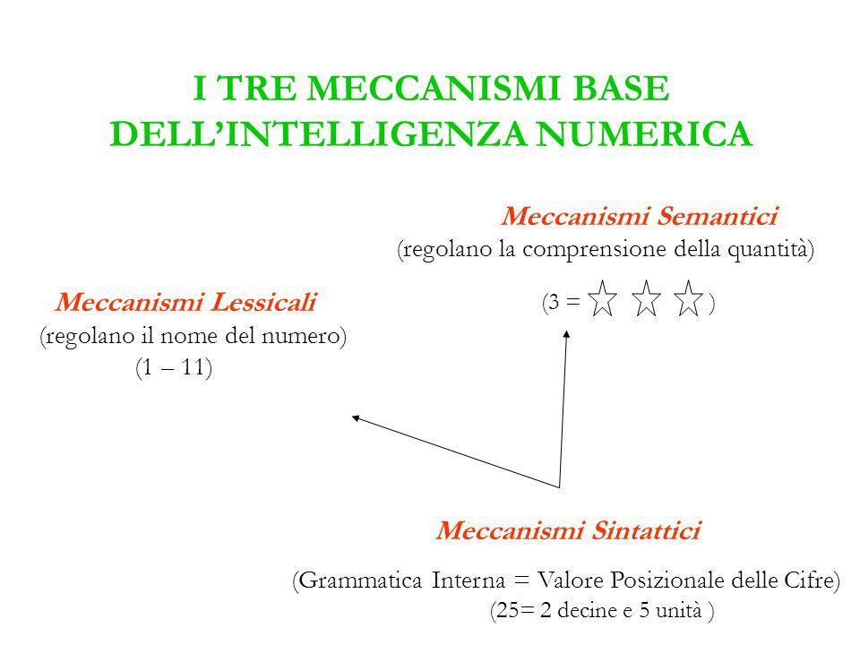 I TRE MECCANISMI BASE DELLINTELLIGENZA NUMERICA Meccanismi Semantici (regolano la comprensione della quantità) (3 = ) Meccanismi Lessicali (regolano i