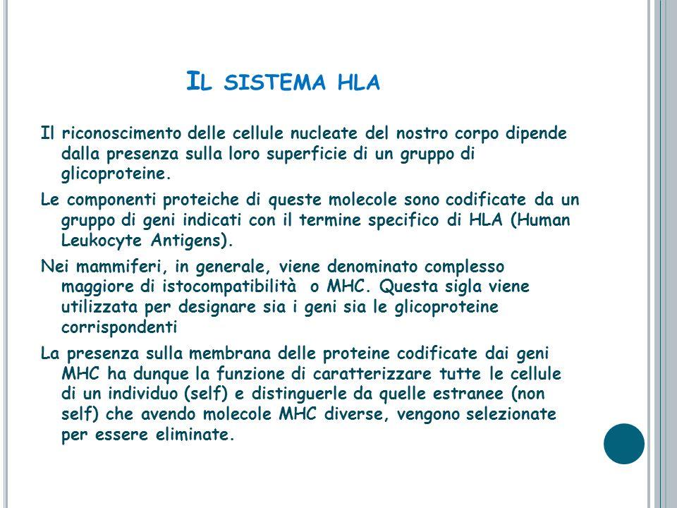 I L SISTEMA HLA Il riconoscimento delle cellule nucleate del nostro corpo dipende dalla presenza sulla loro superficie di un gruppo di glicoproteine.