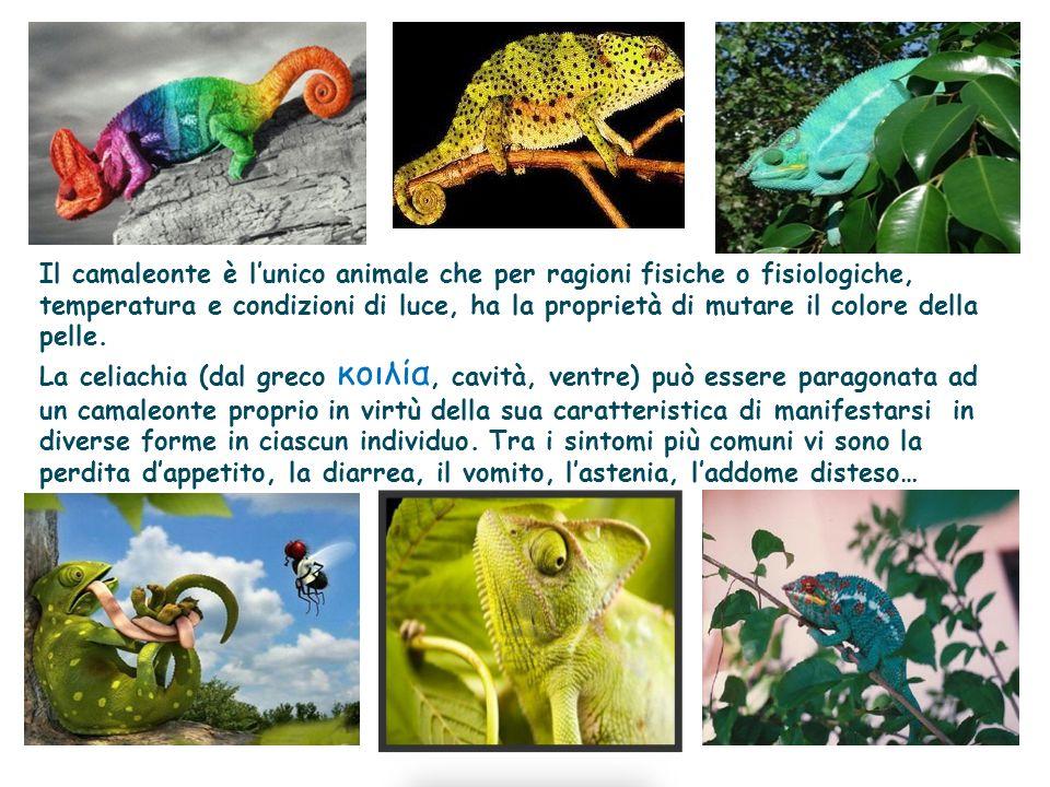 Il camaleonte è lunico animale che per ragioni fisiche o fisiologiche, temperatura e condizioni di luce, ha la proprietà di mutare il colore della pel