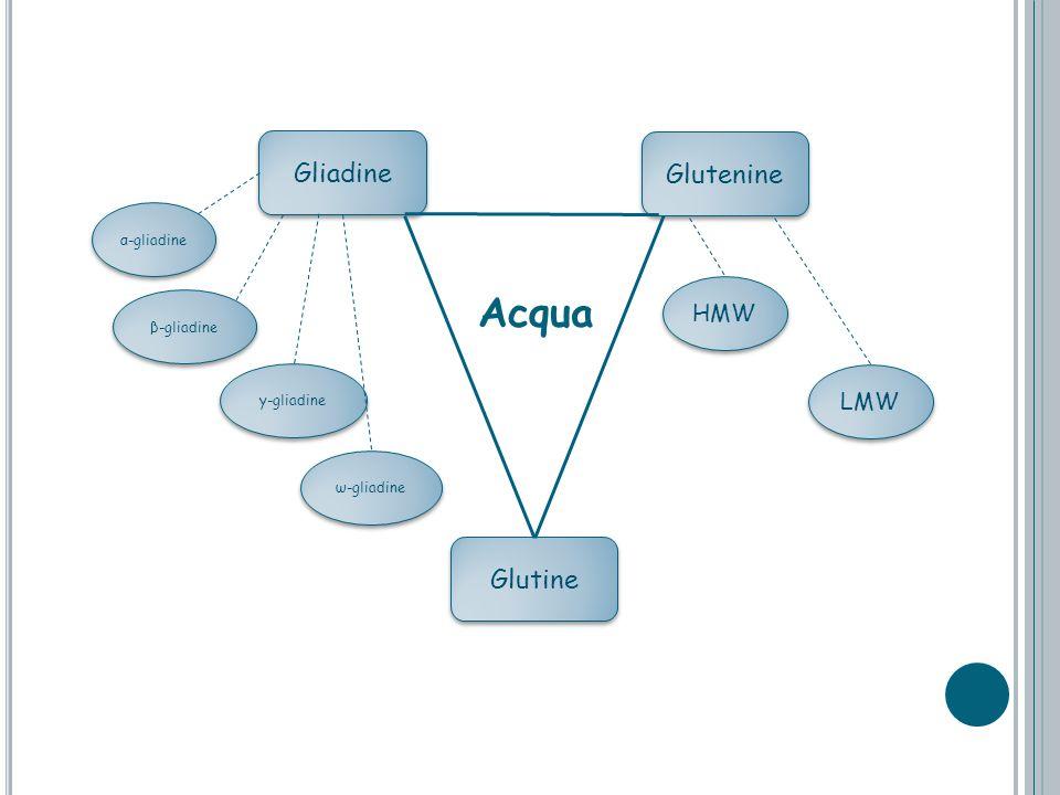 Gliadine Glutenine Glutine α-gliadine β-gliadine y-gliadine ω-gliadine LMW HMW Acqua