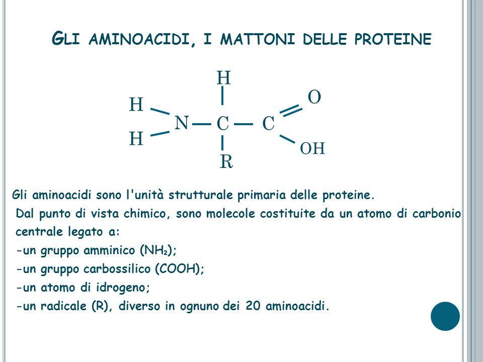 N H H CC O OH H G LI AMINOACIDI, I MATTONI DELLE PROTEINE Gli aminoacidi sono l'unità strutturale primaria delle proteine. Dal punto di vista chimico,