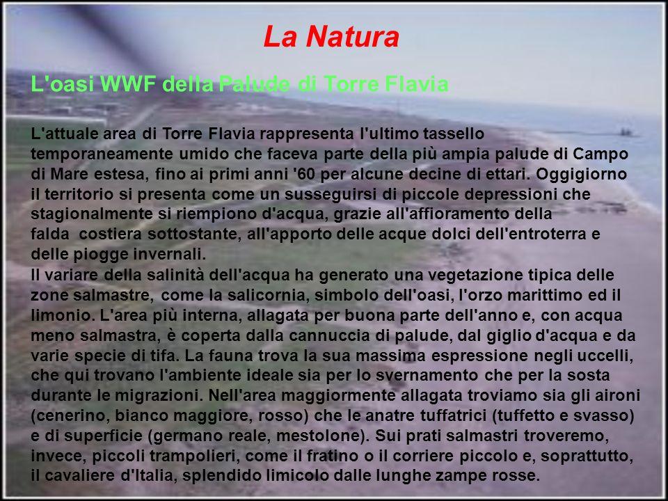 L oasi WWF della Palude di Torre Flavia L attuale area di Torre Flavia rappresenta l ultimo tassello temporaneamente umido che faceva parte della più ampia palude di Campo di Mare estesa, fino ai primi anni 60 per alcune decine di ettari.