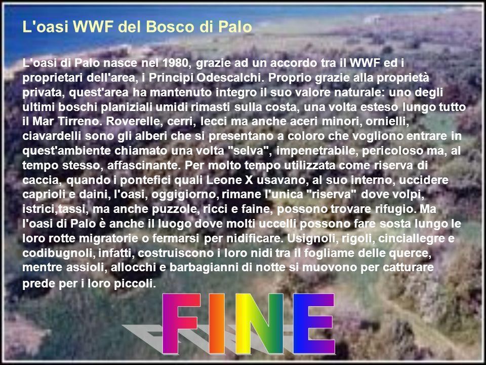 L'oasi WWF del Bosco di Palo L'oasi di Palo nasce nel 1980, grazie ad un accordo tra il WWF ed i proprietari dell'area, i Principi Odescalchi. Proprio