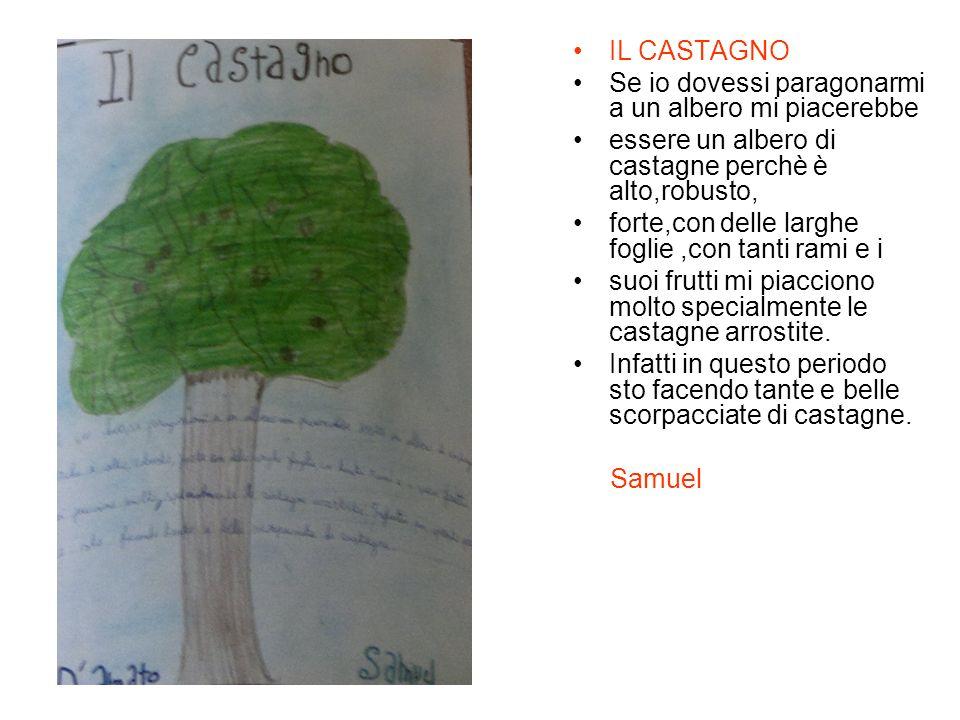 IL CASTAGNO Se io dovessi paragonarmi a un albero mi piacerebbe essere un albero di castagne perchè è alto,robusto, forte,con delle larghe foglie,con