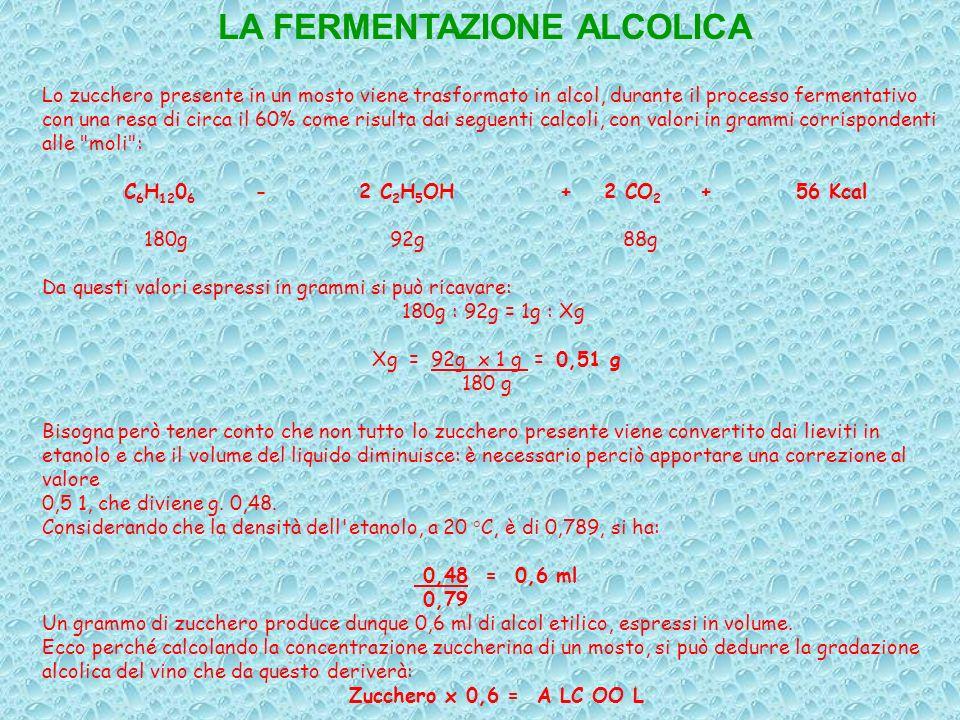 Lo zucchero presente in un mosto viene trasformato in alcol, durante il processo fermentativo con una resa di circa il 60% come risulta dai seguenti c