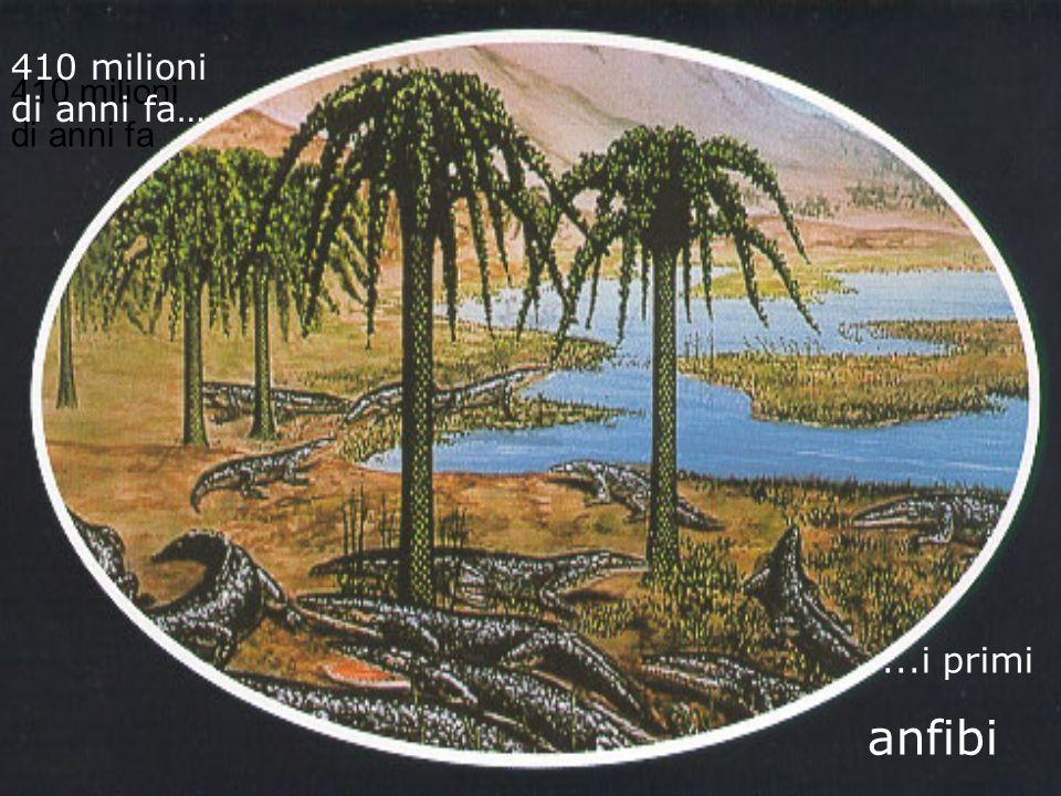 410 milioni di anni fa 410 milioni di anni fa…...i primi anfibi
