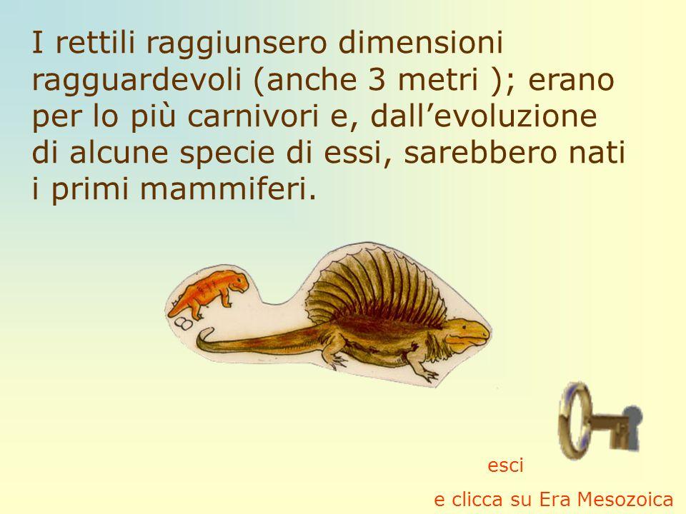 I rettili raggiunsero dimensioni ragguardevoli (anche 3 metri ); erano per lo più carnivori e, dallevoluzione di alcune specie di essi, sarebbero nati