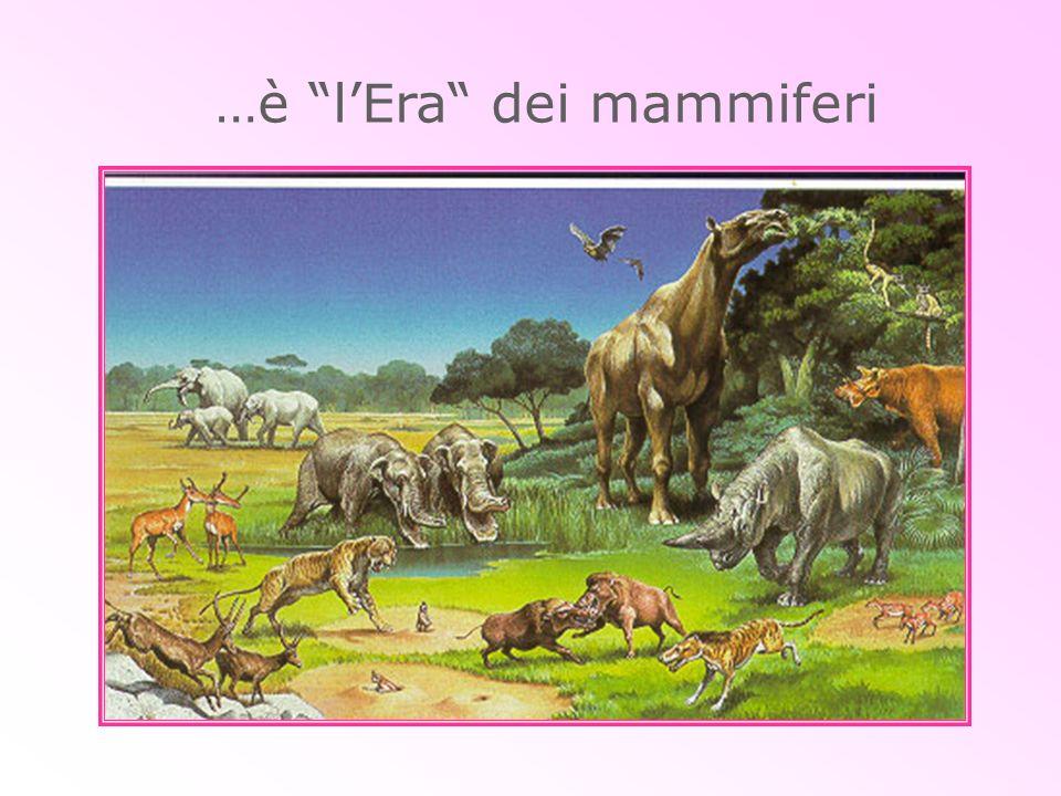 …è lEra dei mammiferi