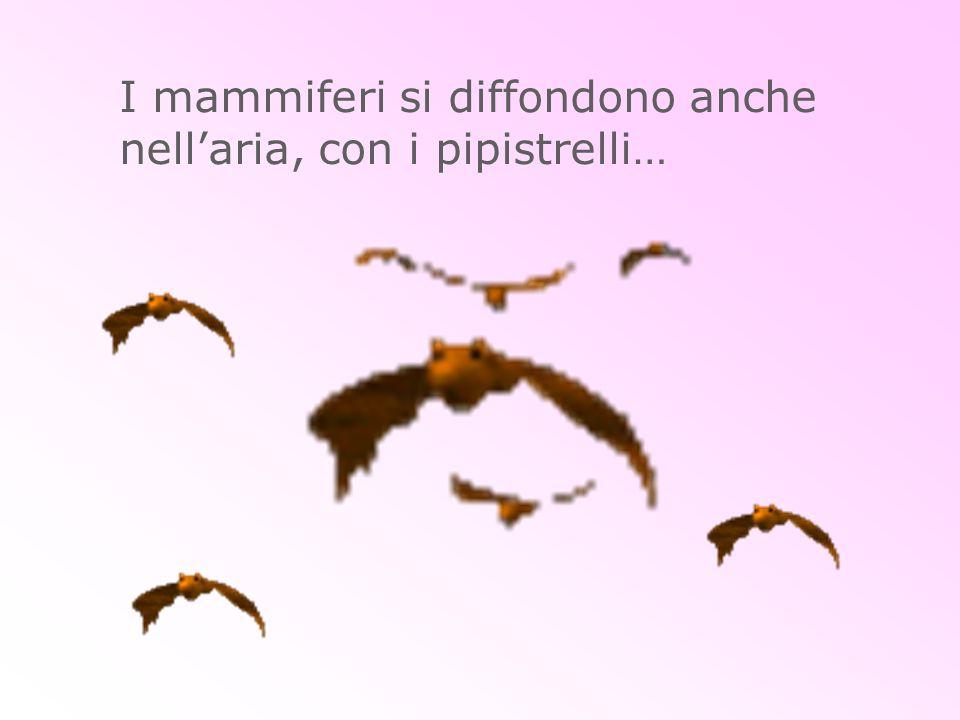 I mammiferi si diffondono anche nellaria, con i pipistrelli…