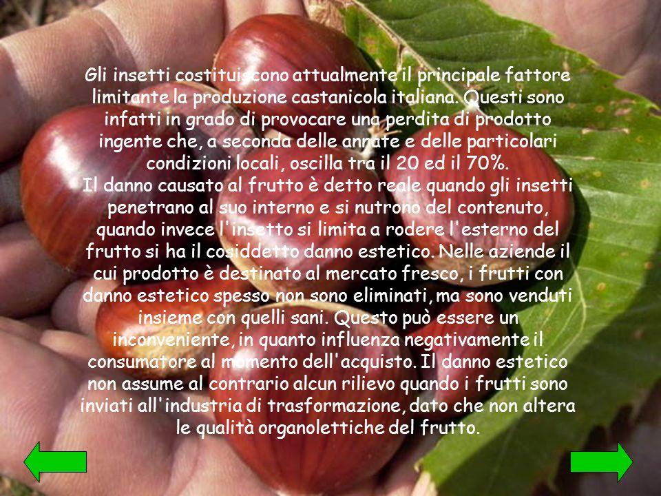 Gli insetti costituiscono attualmente il principale fattore limitante la produzione castanicola italiana.
