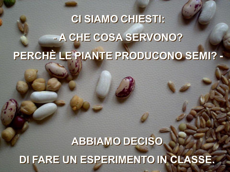 ABBIAMO DECISO DI FARE UN ESPERIMENTO IN CLASSE.ABBIAMO DECISO DI FARE UN ESPERIMENTO IN CLASSE.