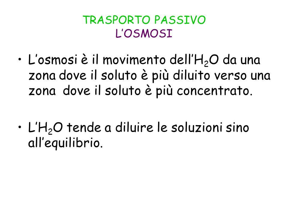 TRASPORTO PASSIVO LOSMOSI Losmosi è il movimento dellH 2 O da una zona dove il soluto è più diluito verso una zona dove il soluto è più concentrato. L