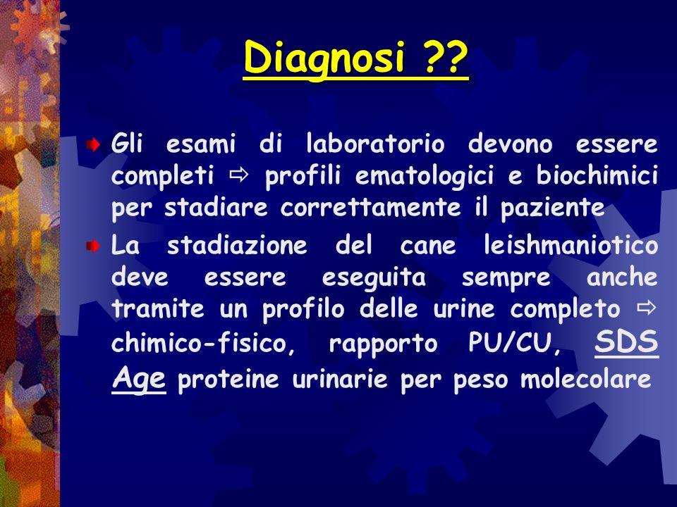 Diagnosi ?? Nessuno dei test menzionati consente da solo di emettere diagnosi di leishmaniosi canina, di effettuare studi epidemiologici, di realizzar