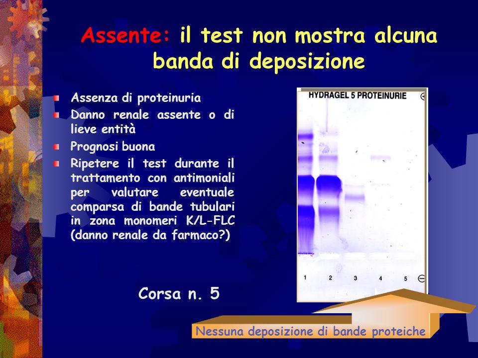 Tipi di proteinuria Assente: il test non mostra alcuna banda di deposizione Semplice Glomerulare: presenza di proteine glomerulari con P.M. fra 900 e