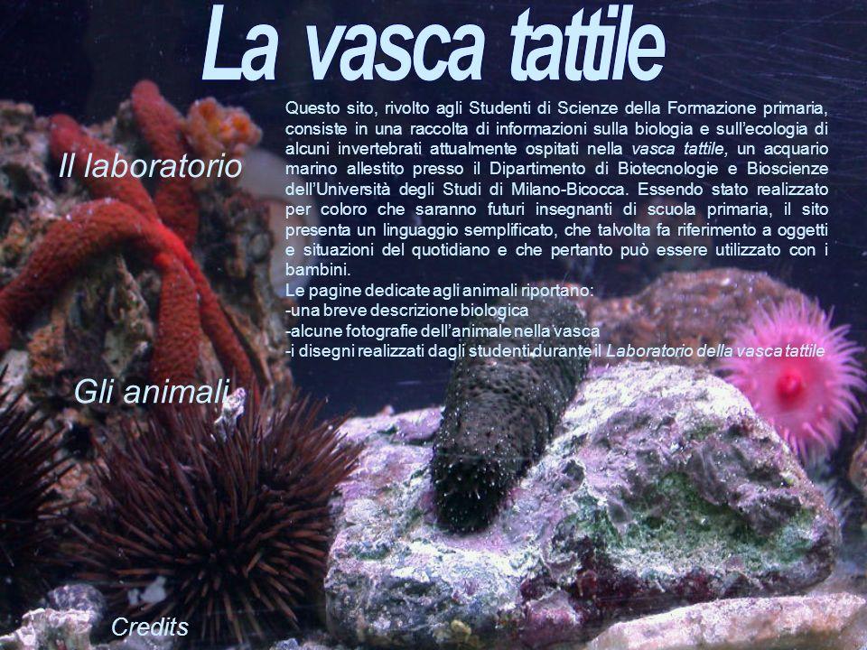Gli animali Il laboratorio Credits Questo sito, rivolto agli Studenti di Scienze della Formazione primaria, consiste in una raccolta di informazioni s