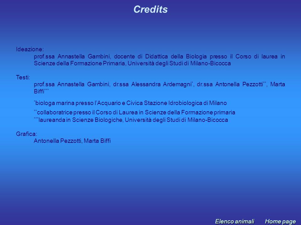 Credits Ideazione: prof.ssa Annastella Gambini, docente di Didattica della Biologia presso il Corso di laurea in Scienze della Formazione Primaria, Un