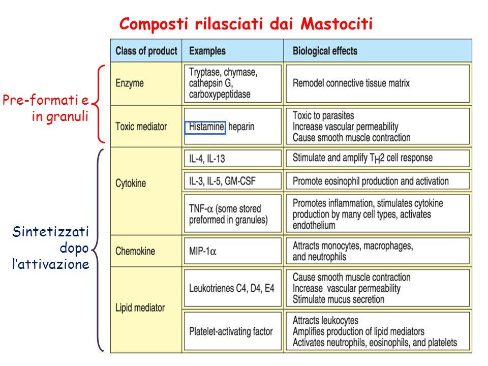 Composti rilasciati dai Mastociti Pre-formati e in granuli Sintetizzati dopo lattivazione