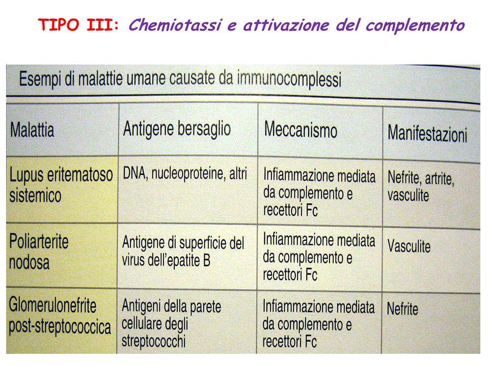 TIPO III: Chemiotassi e attivazione del complemento