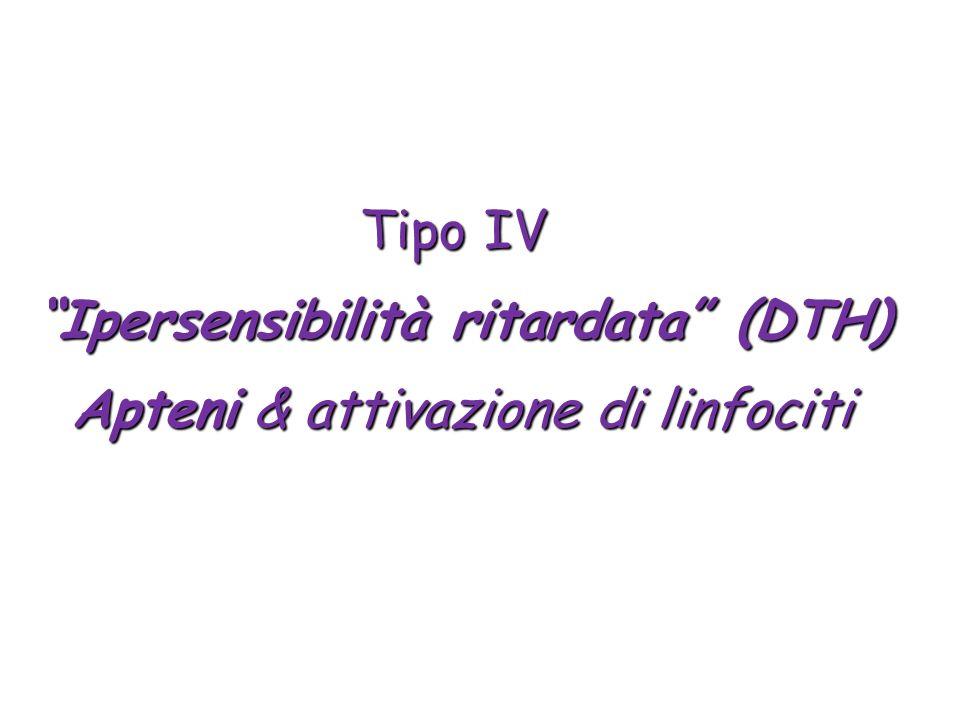 Tipo IV Ipersensibilità ritardata (DTH) Apteni & attivazione di linfociti