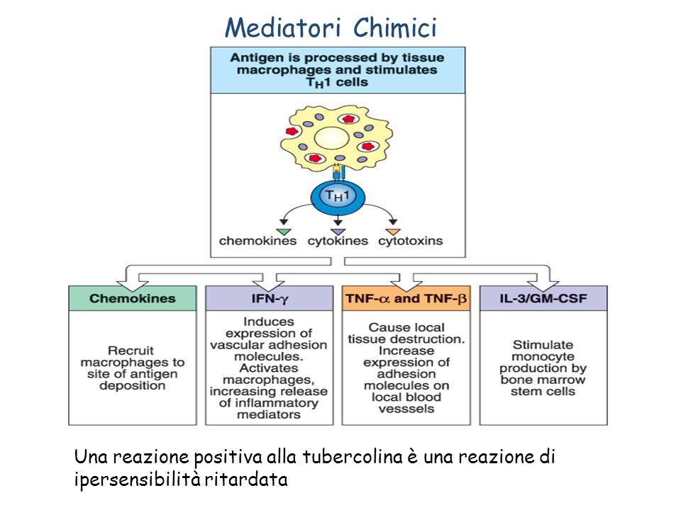 Mediatori Chimici Una reazione positiva alla tubercolina è una reazione di ipersensibilità ritardata